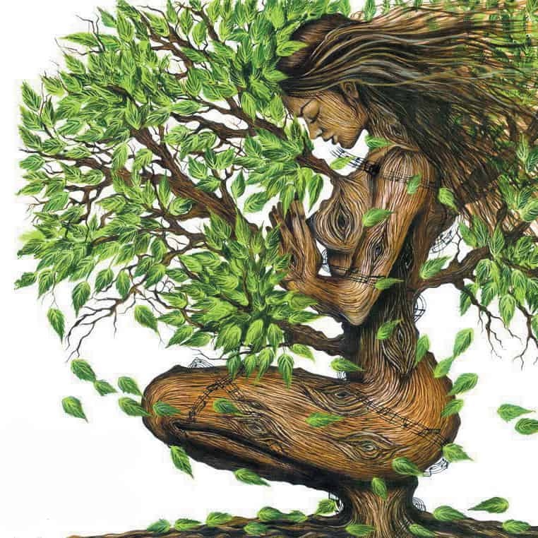 energie-bois-arbre